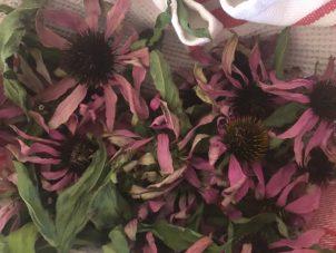 Photo From: Homemade Echinacea Tea